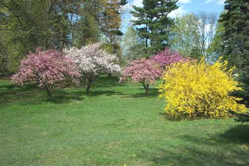 Shades of Spring (Photo: P. Fennessy)