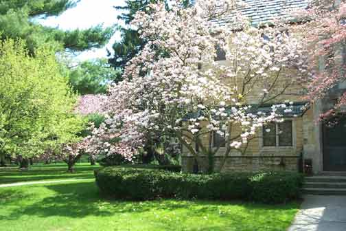 Magnolias near the old front door