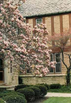Tudor facade and magnolia